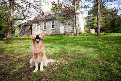 Anjing Buta Terapis Profesional